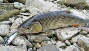 Акустична багатофункціональна приманка для риболовлі