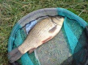 Що робити з спійманої рибою? Як приготувати