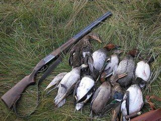 Інші способи полювання на качок