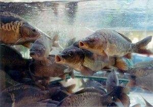 Два місяці в криму буде заборонена риболовля