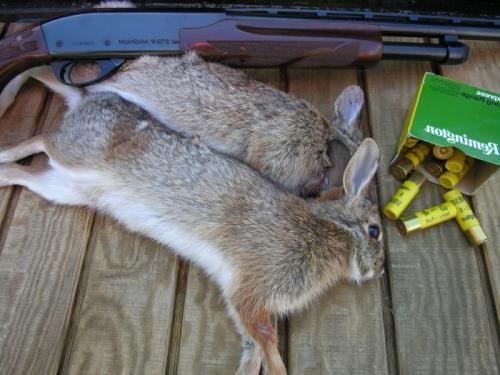 Після вдалого полювання