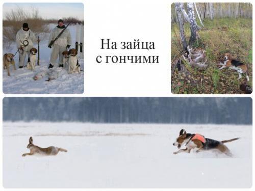 Полювання з гончак