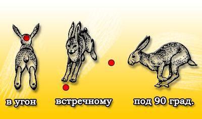 Куди цілитися в зайця