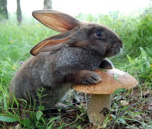Заєць в лісі