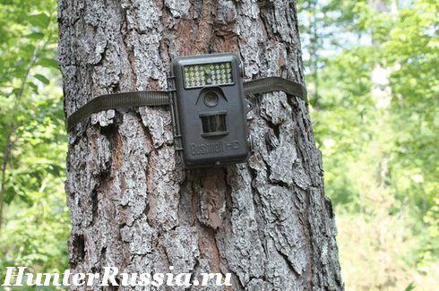 Фотопастки (лісові камери). Що за прилад і як застосовувати (фото, відео)