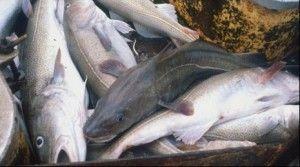 Глава росриболовства виступає за безкоштовну любительську риболовлю