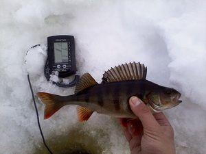 Відгуки любителів зимової риболовлі про ехолоті Практик ЕР 6 Pro