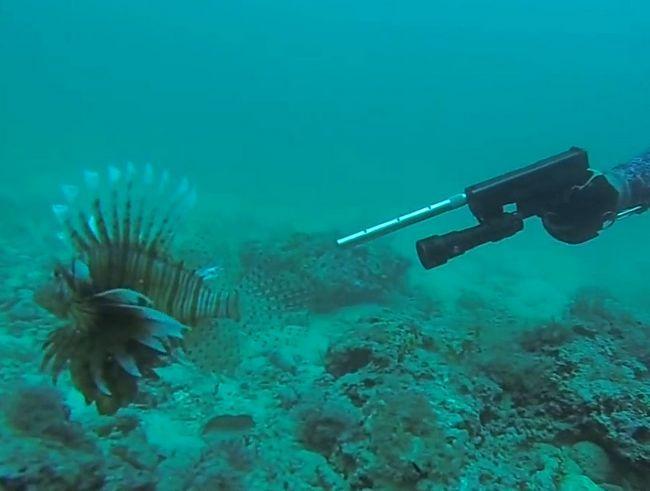 Екологи відстрілюють риб-крилаток в Атлантиці