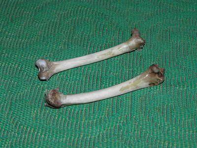 Кістки для виготовлення манка