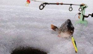 Електронна блешня для успішної риболовлі підсумки