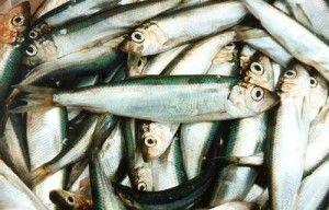 Яку користь риба салака може принести нашому організму?