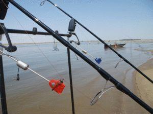 Карпфішінг для початківців рибалок: вибір снастей і відео