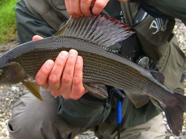 Лов спінінгом риби