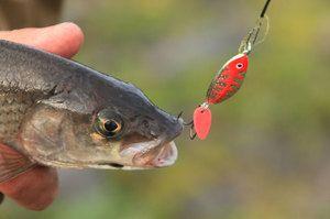Методи лову риби на спінінг