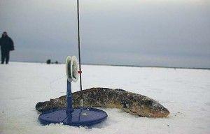 Ловля миня взимку - кілька секретів успішної риболовлі. Відео