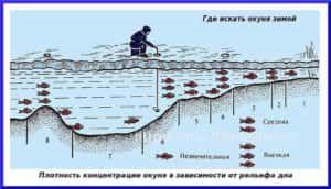 Ловля окуня по першому льоду