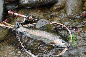 Ловля річкової форелі