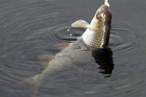 Ловля риби спінінгом на джиг: техніка, методики, різновиди, правила. Ловля на джиг приманки з берега і з човна. Відео
