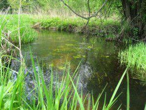 Ловля щуки на малій річці