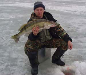 Ловля судака по першому льоду
