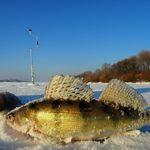 Ловля судака взимку