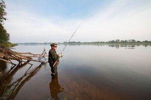 Нюанси лову риби жереха з використанням спінінга
