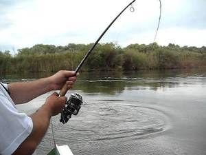 Опис особливостей клювання жереха і виведення риби
