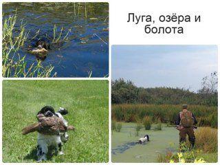 Наші полювання