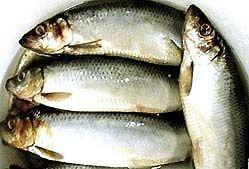 Мокрий посол риби