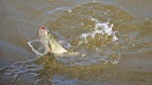 На бутурлиновский ставку пройшли районні змагання з рибної ловлі