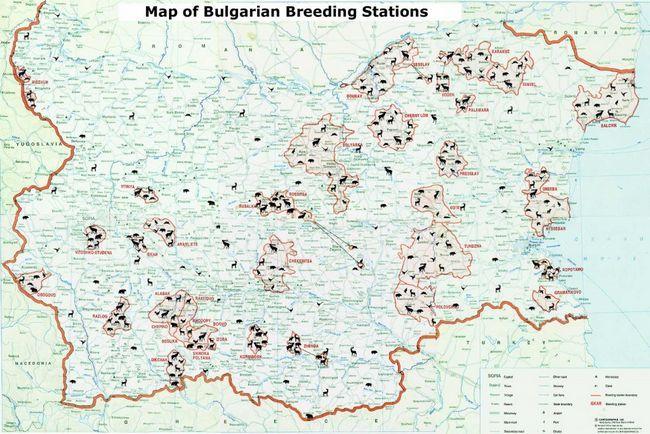 На полювання в болгарію - одну з кращих мисливських країн в східній європі