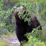 кмітливий ведмедик