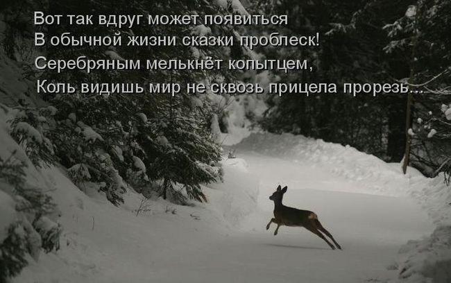 Романтика дикої природи
