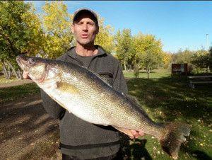 Новий рекорд з ловлі судака нахлистом - перевищена планка в 7 кг!