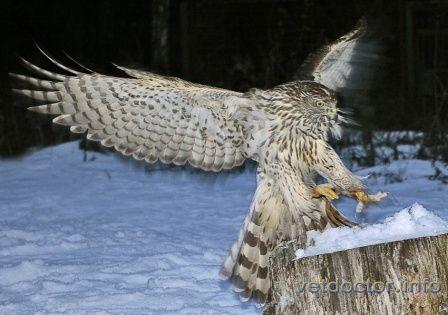 Про полювання c птахом і філософії