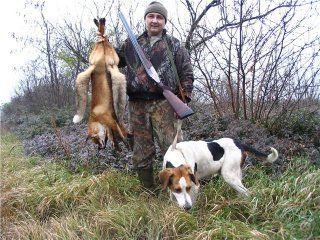 Огляд і опис основних порід гончих собак і особливості їхньої поведінки на полюванні