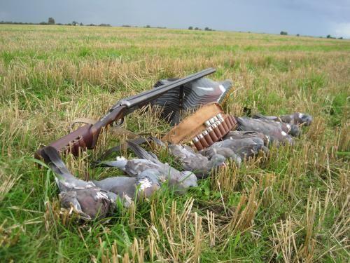 Полювання на диких голубів - як підготуватися, які види бувають і в чому інтерес