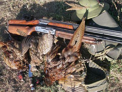 Полювання на фазана