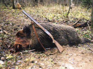 Полювання на кабана з підходу (скрадом)