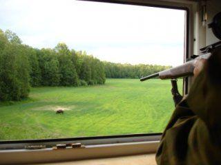 Полювання на кабана з вишки
