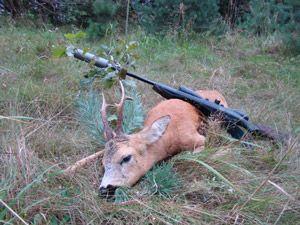 Результативна полювання на козулю з манком