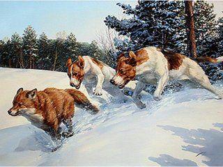 Полювання на лисицю з собаками