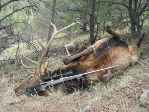 Зброя для полювання на лося і результат його роботи