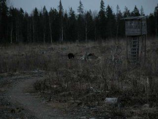 Полювання на ведмедя на приваде (на засідоку)