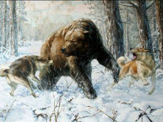Полювання на ведмедя в колі