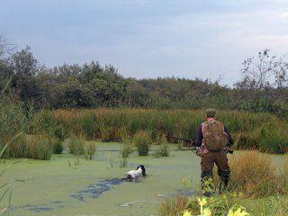 Полювання на качку і водоплавну дичину зі спанієлем - цікава і добутлива
