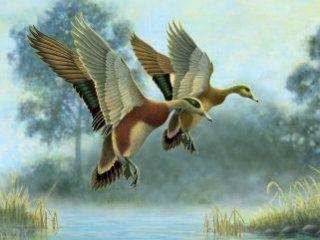 Полювання на качку на перельотах