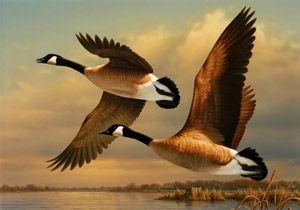 Полювання на качку восени