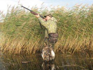 Полювання на качку з підходу, скрадом