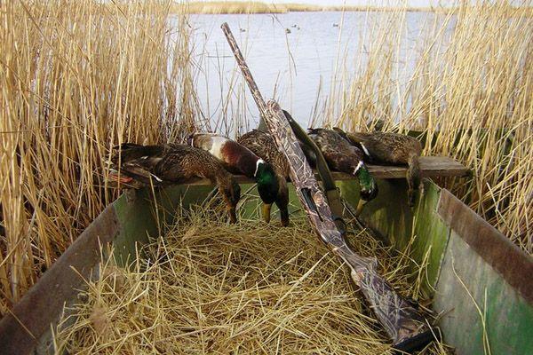 Полювання на качку
